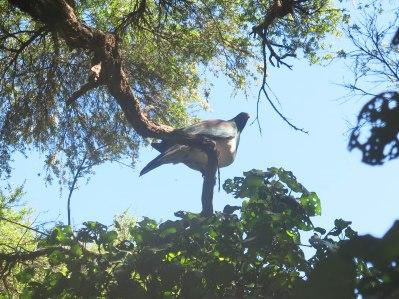Kapiti island Naure Reserve